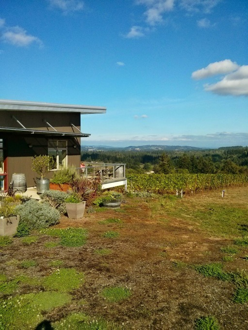 Raptor Ridge Vineyard