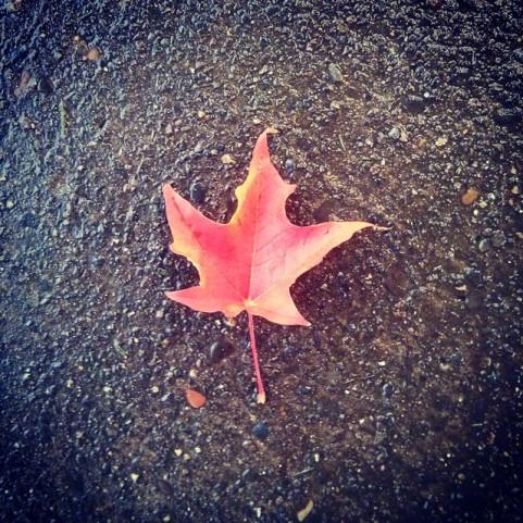 Gorgeous fall leaf.