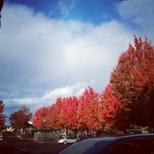 Taken Nov. 9th. I love Oregon!