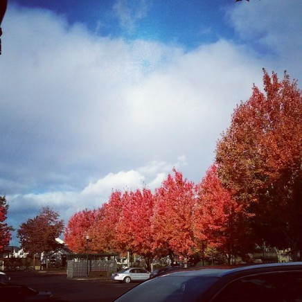 Taken Nov. 9th. I love Oregon!