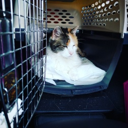 Pixel wanted nothing to do with being cooped up in her kennel.