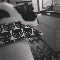 Roxy on her $4 Ikea pillow. She sleeps on it constantly.