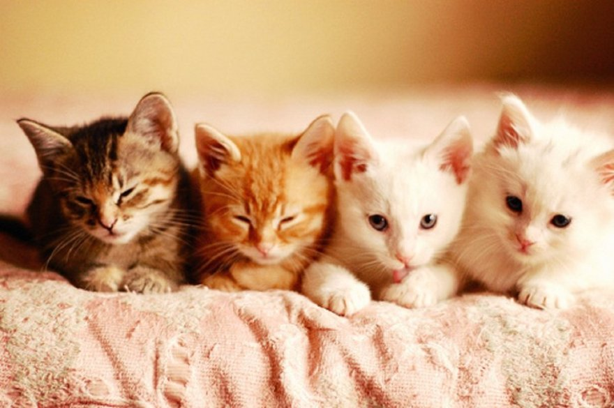 I tried to find a funny uterus/fibroid image - THEY DON'T EXIST - instead I found more squick-worthy photos of surgeries. Please don't search for those things. Here are some kittens instead.
